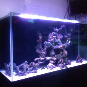 ullas-aquarium-edapally-ernakulam-aquariums-1qw4820